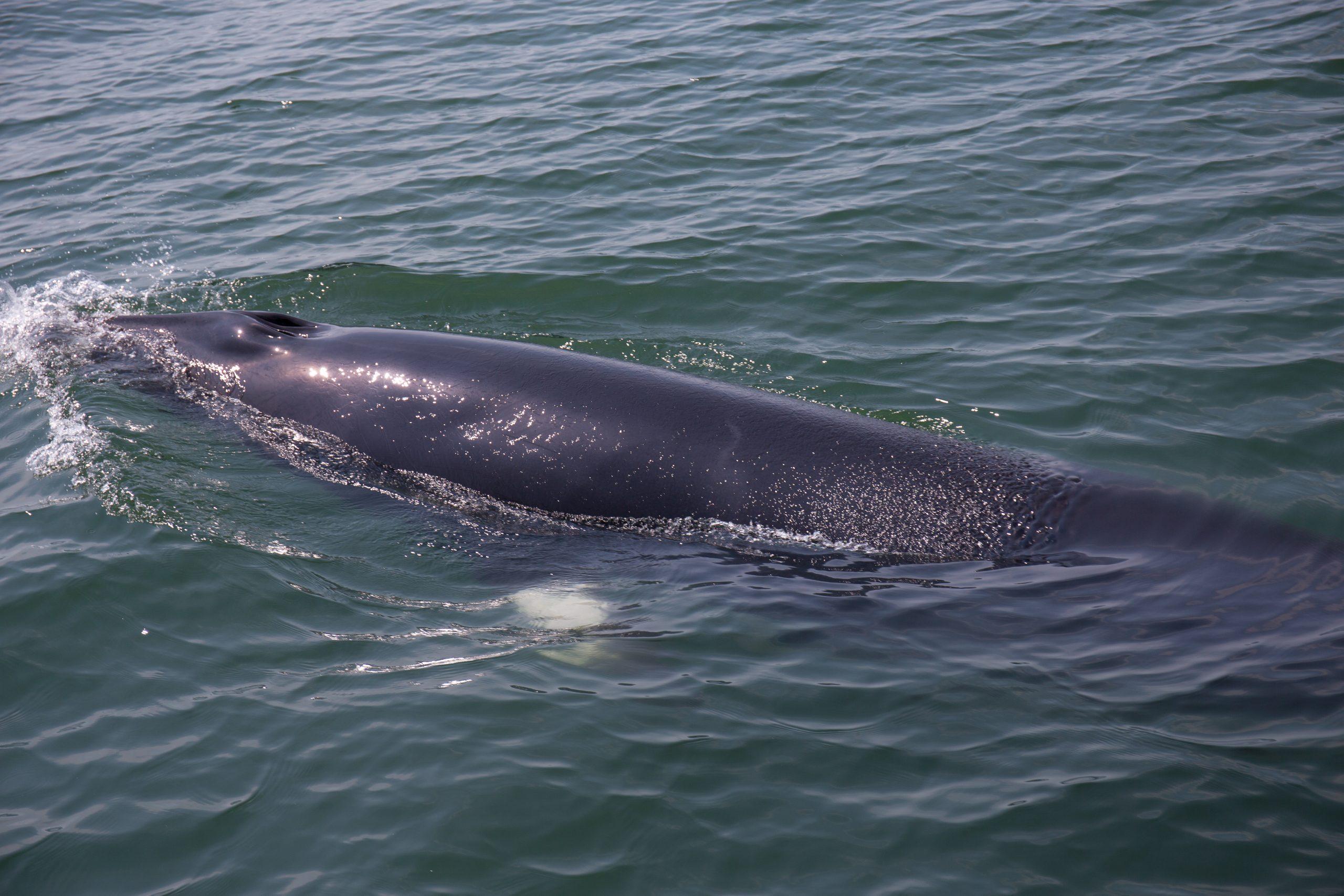 La baleine clairvoyante,